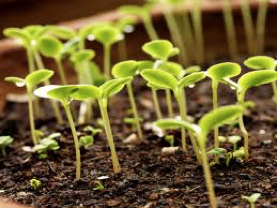 Gardening & Conferences
